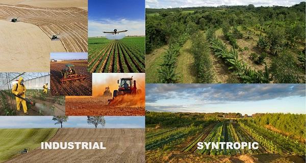 Syntropic Farming