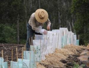 20 Million Trees Programme grants launched