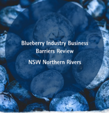 Blueberry Industry Business Barriers Review – NSW Northern Rivers